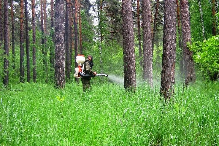 Обработка от клещей лесных массивов в Архангельске